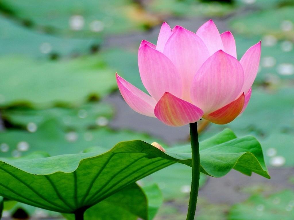 Cốt cách của người xinh đẹp chính là lòng từ bi